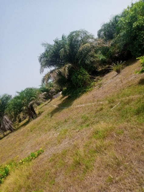 80 ACRES OF LAND FOR GRAB